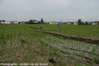 Fissures dans un champ, conséquences du séisme du 20 mai 2012, près de Mirabello (Italie)