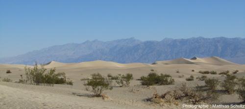 Dunes éoliennes à Mesquite Flat Sand Dunes, Vallée de la Mort, Californie