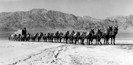 Attelage de 20 mules pour transporter vers la côte californienne le borax extrait dans la Vallée de la Mort