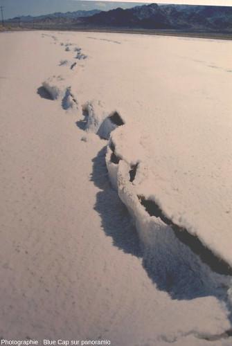 Bordures de sel en relief le long d'une fente dans une croûte de sel, Badwater, Vallée de la Mort, Californie