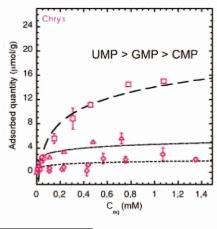 Courbes d'adsorption de nucléotides monophosphatés sur une serpentine, le chrysotile