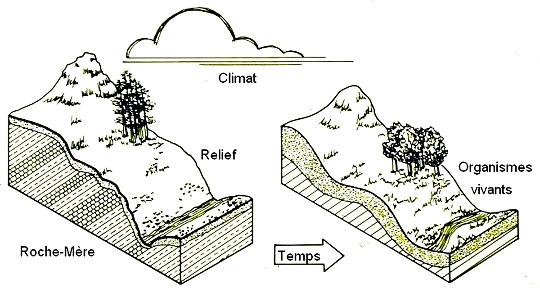 Les principaux facteurs de formation des sols