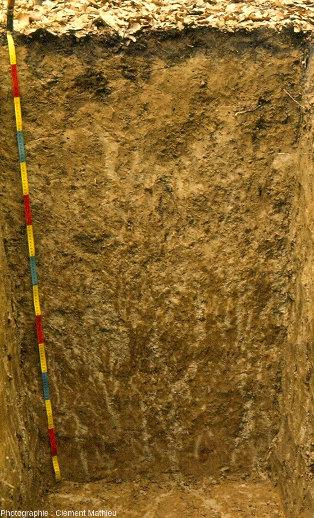 Sol lessivé très dégradé développé dans un limon lœssique sous futaie, Pisseleux, le Valois, département de l'Aisne