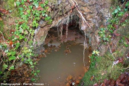 Croûtes de calcite flottant et formant de mini-radeaux à la surface de la source de Saurier-4 (63)