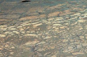 Dalles claires et myrtilles du sol martien