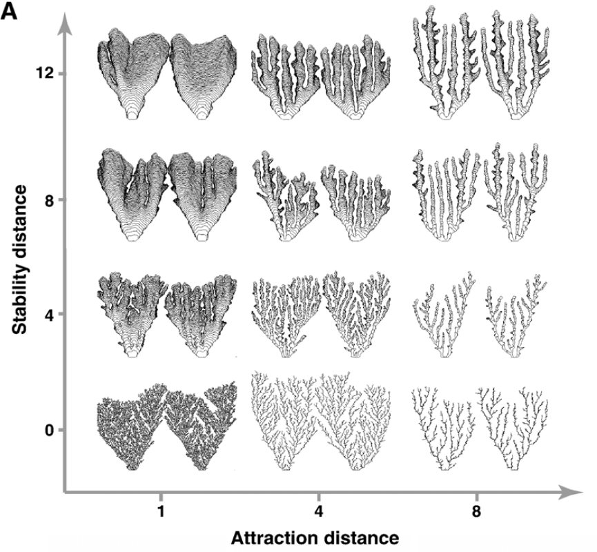 Modélisation mathématique de stromatolithes