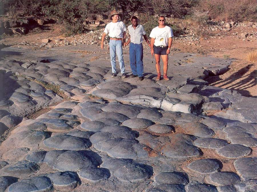 Stromatolithes en boules (ou en champignons)