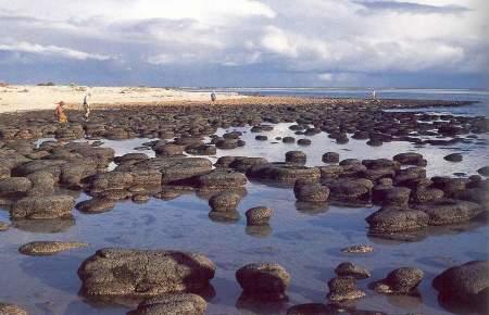 Stromatolithes actuels, Hamelin Pool, Shark Bay, Western Australia