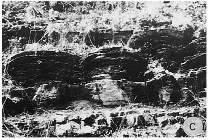 Stromatolithes en petits dômes, Gauteng, Afrique du Sud