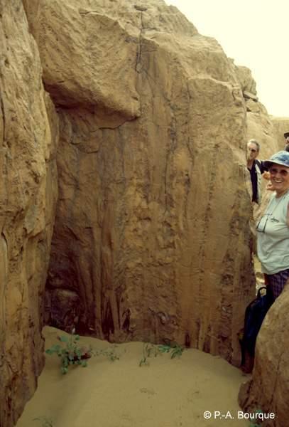Stromatolithes columnaires, Protérozoïque (environ 1,2Ga)