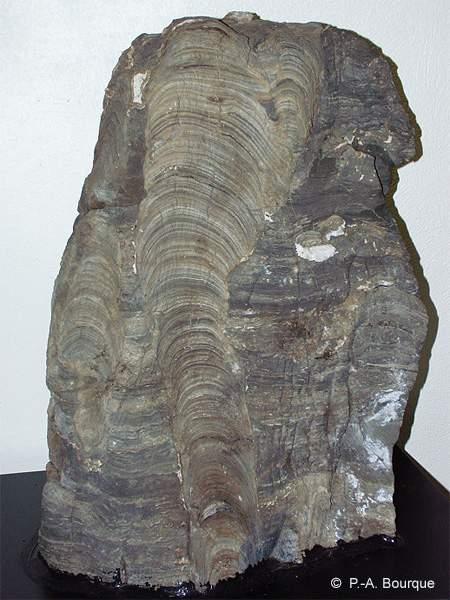 Colonnes stromatolithiques datant du Protérozoïque (2Ga)