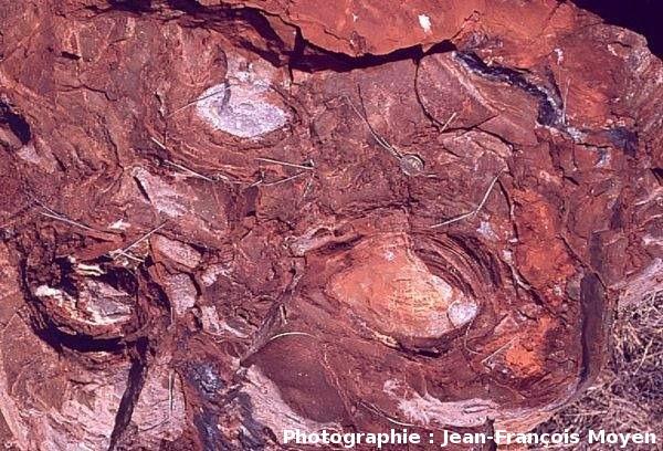 Stromatolithes en cônes, Strelley Pool Cherts (3430Ma), vue en coupe