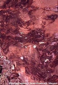 Stromatolithes en cônes, Strelley Pool Cherts (3430Ma), autre vue en coupe
