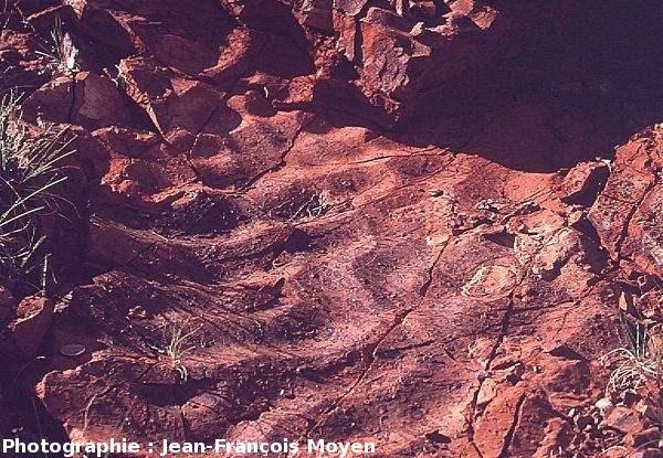 Ripple marks associées aux stromatolithes du Strelley Pool Chert
