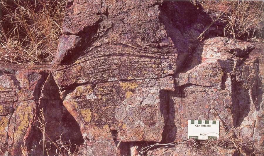 Stromatolithes de la région de Barberton, Afrique du Sud