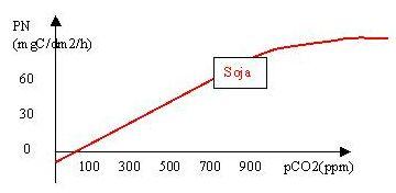 Photosynthèse nette (PN= photosynthèse– respiration) en fonction de la pression partielle de CO2 atmosphérique