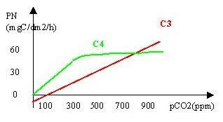 Photosynthèse nette des plantes en C3 et C4 en fonction de la pression partielle de CO2 atmosphérique