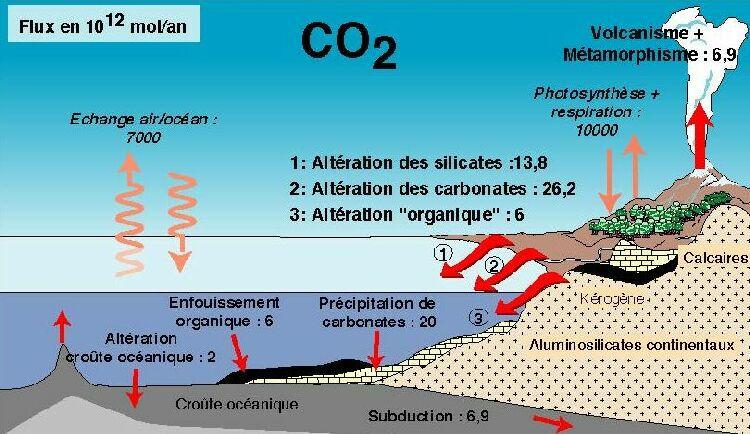 Les réservoirs du cycle du carbone.