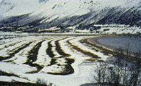 Plages fossiles à Sandbukt, en Norvège.