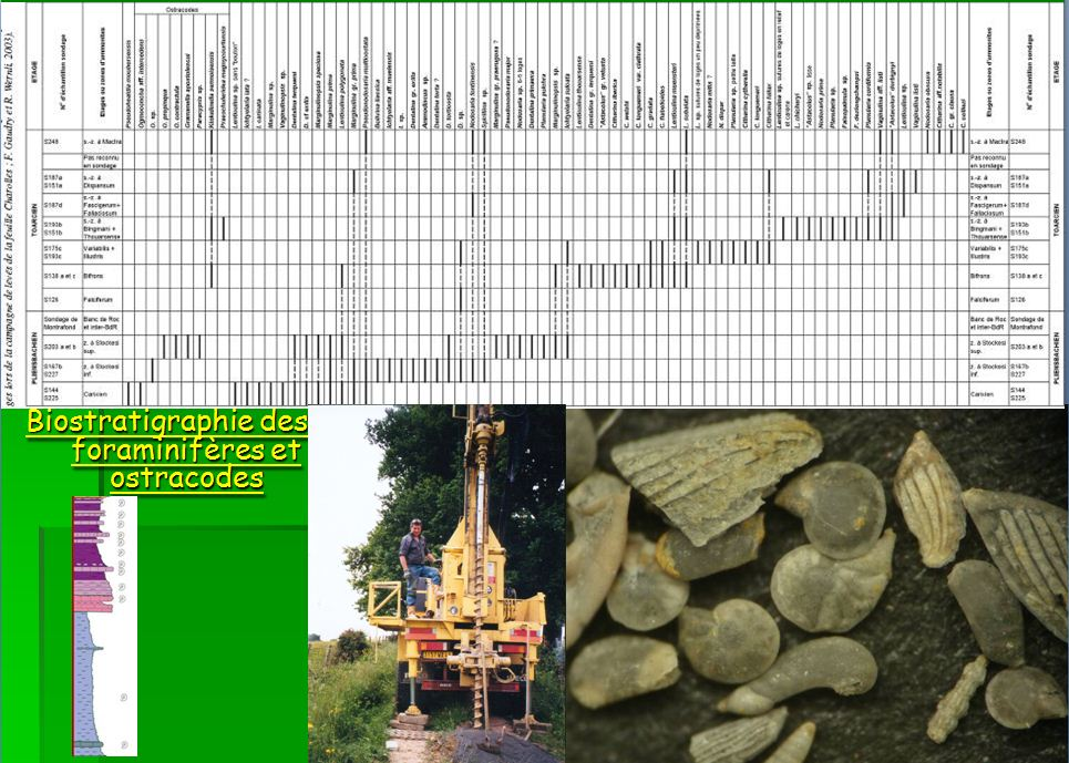 Exemple de biostratigraphie fine à partir des ostracodes et des foraminifères dans le Lias argileux et marneux du Brionnais-Charollais, corrélée aux zones d'ammonites