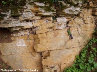 Affleurement de calcaires à entroques, La Vernelle, Sud de Charolles