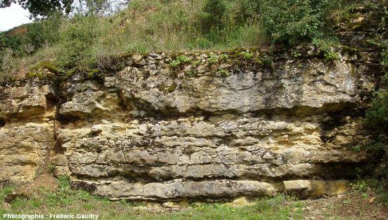 Calcaires à gryphées arquées dans les anciennes carrières de fours à chaux de Hautefond
