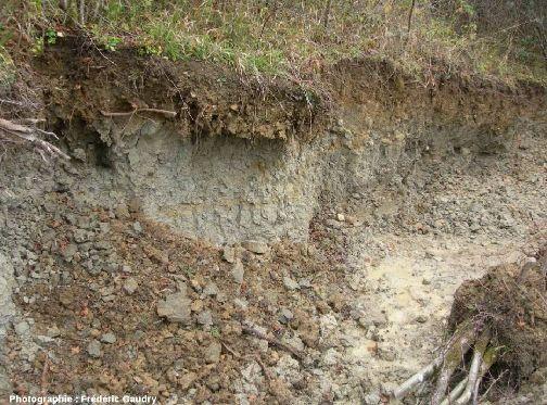 Entaille de recherches paléontologiques dans les marnes argileuses toarciennes