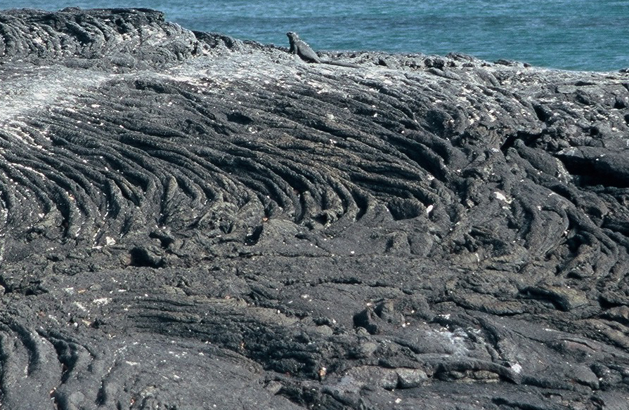 Coulée de lave cordée (Galapagos)