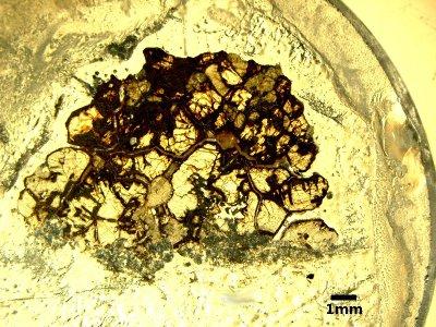 Lame mince en lumière polarisée non analysée de l'uréilite NWA 4515