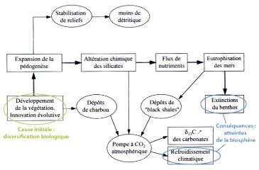 Schéma du rôle possible du développement des forêts dans l'extinction du Frasnien-Famennien