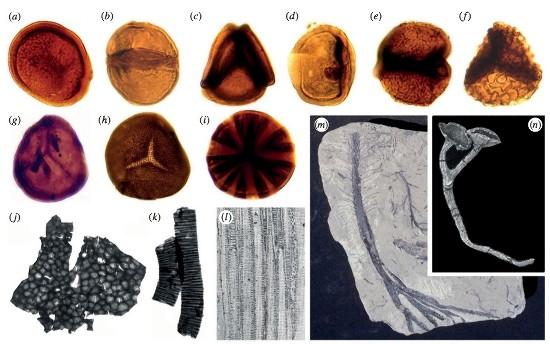 Exemples de fossiles des premiers végétaux des terres émergées
