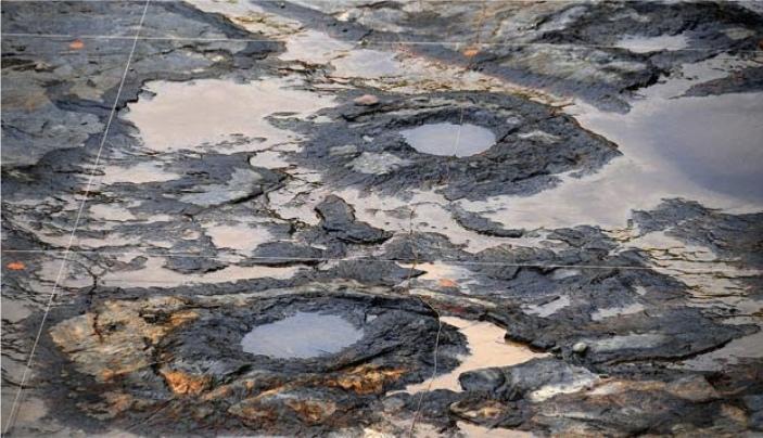 Portion de la dalle dégagée en 2010 dans la carrière de Riverside Quarry, Gilboa, montrant deux systèmes racinaires de Eospermatopteris
