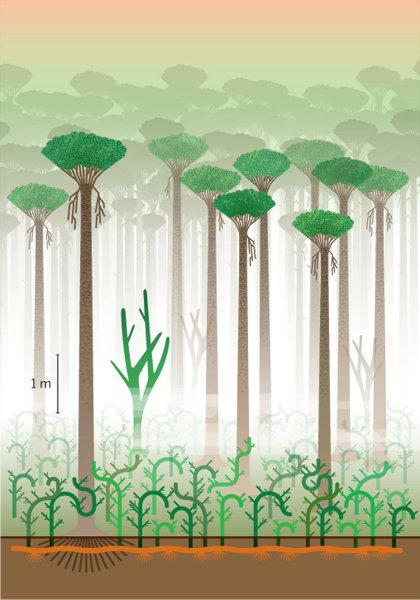 Reconstitution de la forêt de Gilboa
