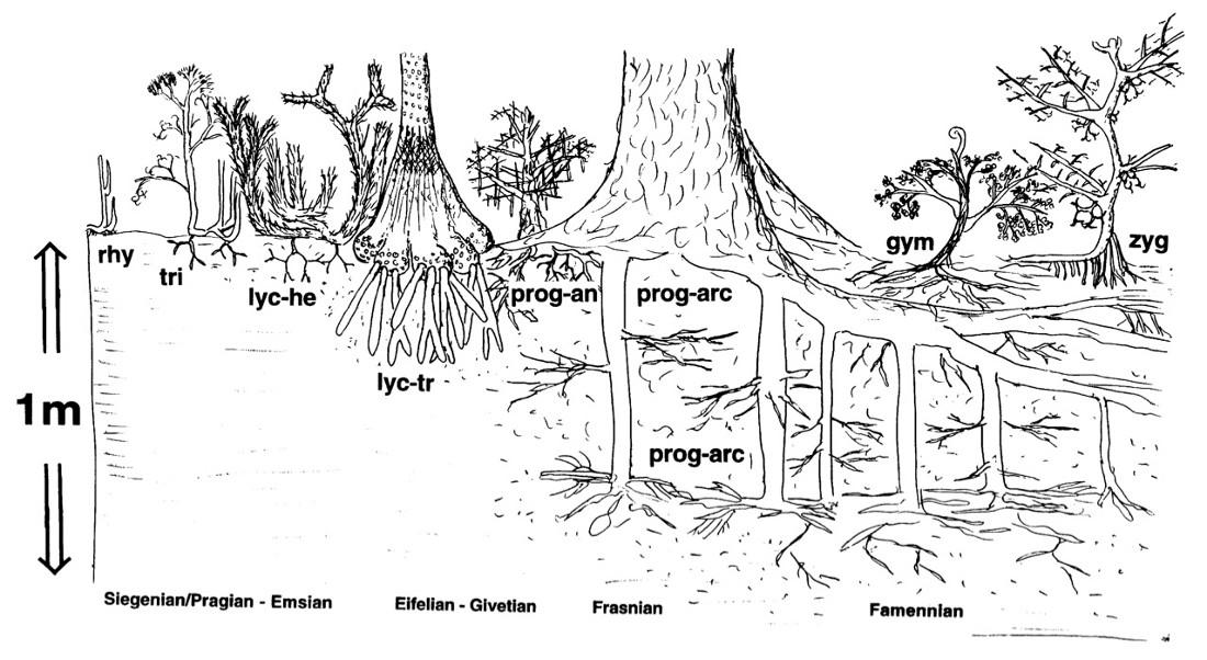 Illustration schématique de l'évolution des morphologies végétales et de la profondeur de pénétration des systèmes racinaires au cours du Dévonien