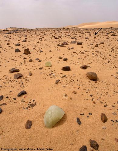 Échantillons de verre libyque en place dans les interdunes encombrés de blocs et galets de roches locales