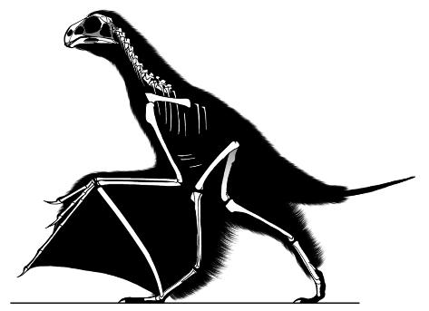 Diagramme squelettique de Yi qi, indiquant le matériel retrouvé