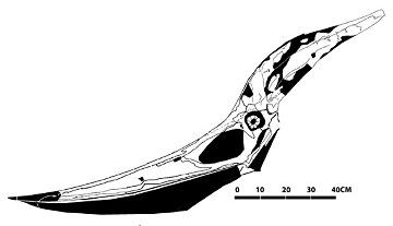 Crâne de Ptéranodon