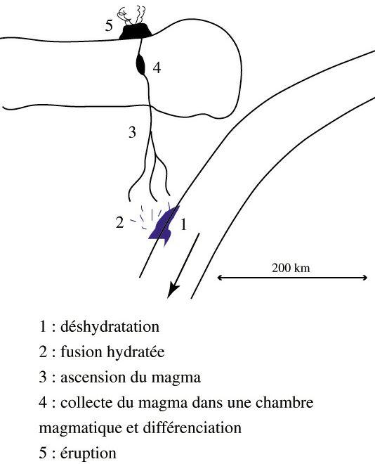 Coupe schématique, magmatisme associé à une subduction