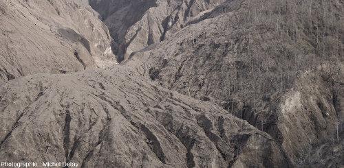 Zoom sur les collines à l'Est du delta et de la vallée par où progressent les CDP issus du Paluweh, variations dans la destruction de la forêt