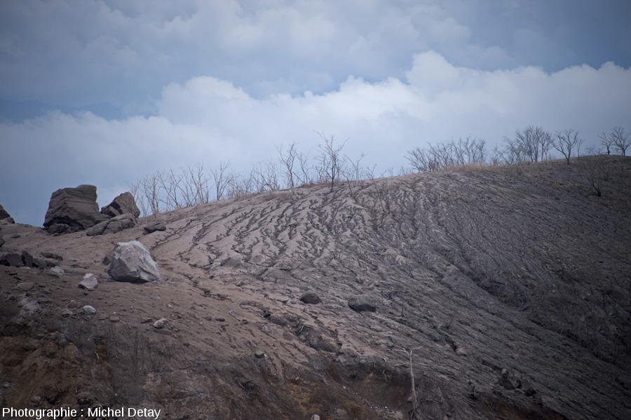 Diverses intensités de destruction de la forêt, entre destruction totale et partielle, effets mélangés des CDP et des retombées des panaches sub-pliniens